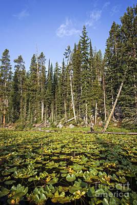 Photograph - Lily Pads On Isa Lake by Bryan Mullennix