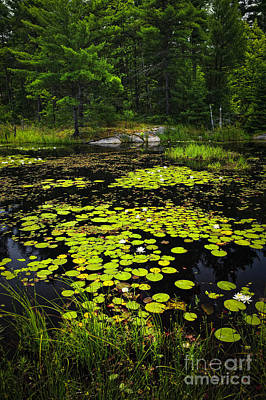 Lily Pads Photograph - Lily Pads On Lake by Elena Elisseeva