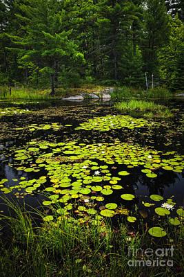 Lily Pads On Lake Art Print by Elena Elisseeva
