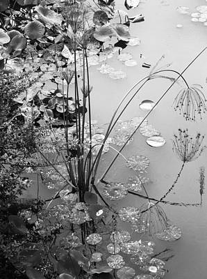 Photograph - Lily Pads by Pat McGrath Avery
