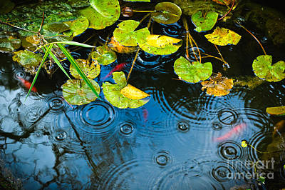 Photograph - Lily Pads Ripples And Gold Fish by Silvia Ganora