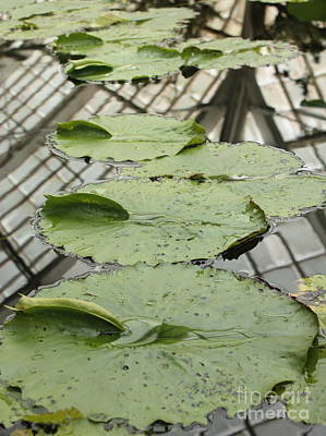 Gardens Photograph - Lily Pads With Reflection Of Conservatory Roof by Carol Groenen