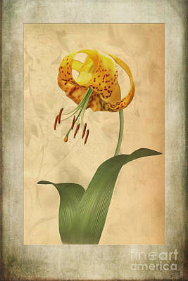 Lilies Royalty-Free and Rights-Managed Images - Lily painting with textures by John Edwards