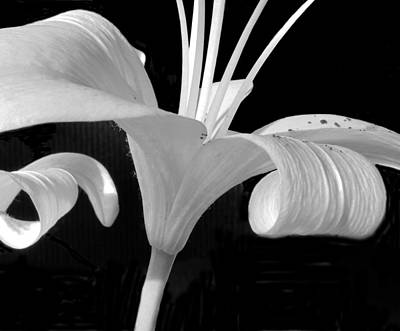 Photograph - Lily Parts Black And White 2 by Mary Bedy