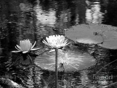 Photograph - Lily Pond 2 by Anita Lewis