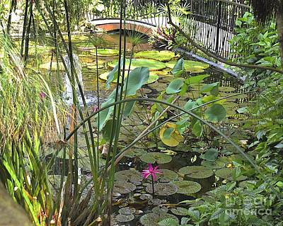 Photograph - Lily Pond by Carol  Bradley