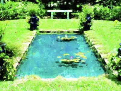 Lily Pond Garden Original