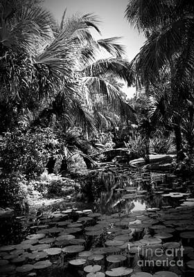 Photograph - Lily Pond I Bw by Anita Lewis