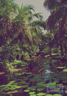 Photograph - Lily Pond I Yesterday by Anita Lewis