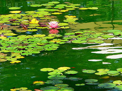 Photograph - Lily Pond  by Jeff Lowe