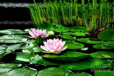 Art Print featuring the photograph Lily Pond by John S