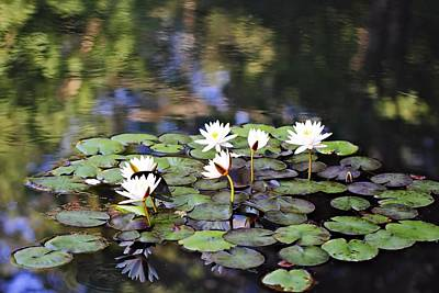 Photograph - Lily Pond by Katherine White