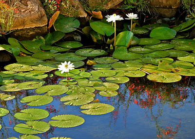 Photograph - Lily Pond by Kirsten Giving