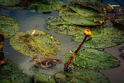 Photograph - Lily Pond by Ludmila Nayvelt