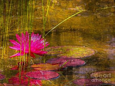 Photograph - Lily Pond by Marcia Lee Jones