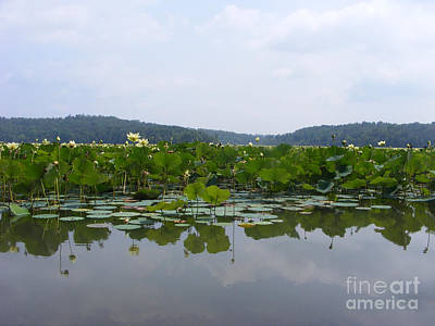 Photograph - Lily Pond by Melissa Lightner