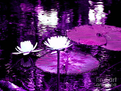 Photograph - Lily Pond Purple by Anita Lewis