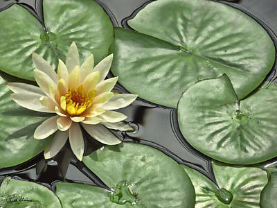 Photograph - Lily Pond by Rich Stedman