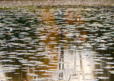 Photograph - Lily Reflections In Autumn by Kristin Hatt