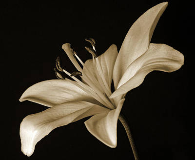 Photograph - Lily by Sandy Keeton