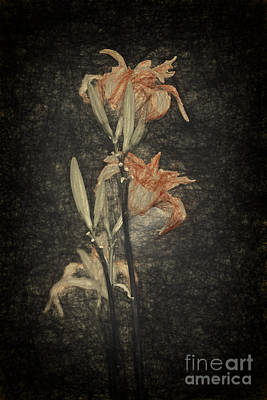 Lilies Digital Art - Lily by Sheila Smart Fine Art Photography