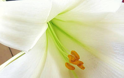 Lily Stamen Art Print by Fortunate Findings Shirley Dickerson