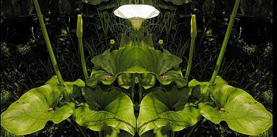Photograph - Lily Symmetry  by Elery Oxford