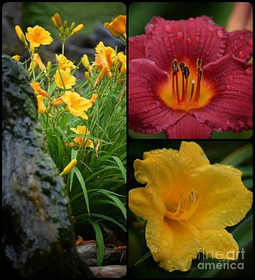 Photograph - Lily Tryptych by Maria Urso