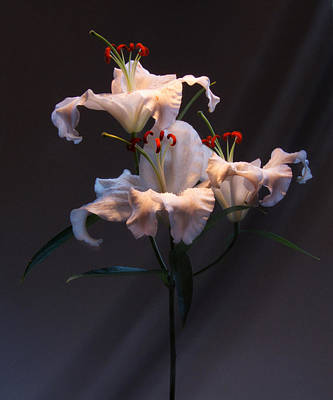 Photograph - Lily Variation #01 by Richard Wiggins