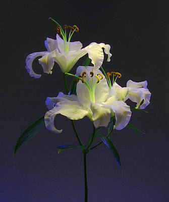 Photograph - Lily Variation #05 by Richard Wiggins