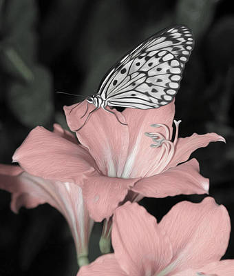 Lily With Butterly  Art Print