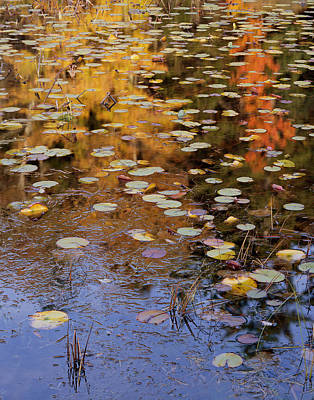 Photograph - Lilypads And Reflection by Tom Daniel