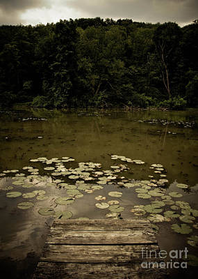 Lilypads At The Dock Art Print by Amy Cicconi