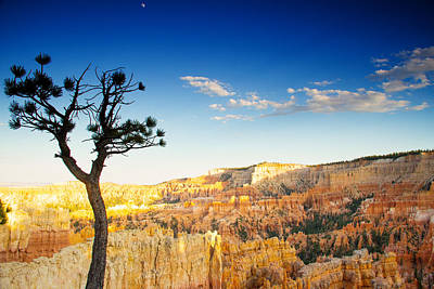 Photograph - Limber Pine And Moon by Kunal Mehra