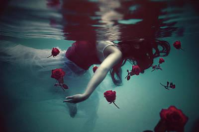 Rose Portrait Photograph - Limbo by Sukaria Nitihandawa