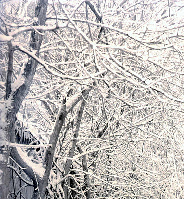 Limbs Covered With Snow Art Print
