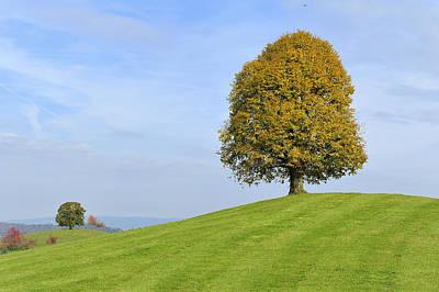 Zug Photograph - Lime Tree Zug Switzerland by Thomas Marent