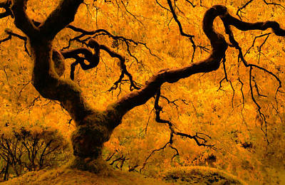 Fall Colors Photograph - Limned In Light by Don Schwartz