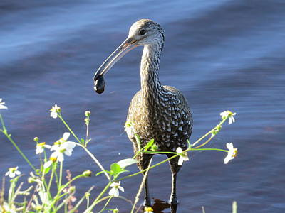 Limpkin With Flowers Art Print by Zina Stromberg