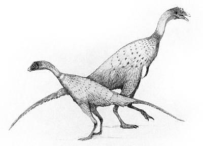 Paleozoology Photograph - Limusaurus Dinosaurs by Nemo Ramjet