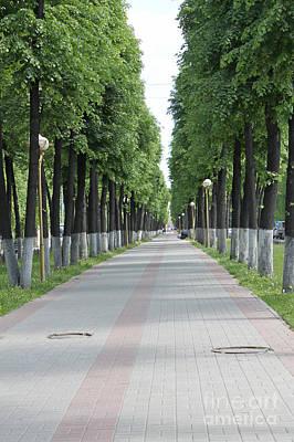 Linden Alley Original by Evgeny Pisarev