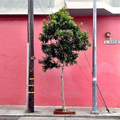 Pink Photograph - Linden Street by Julie Gebhardt