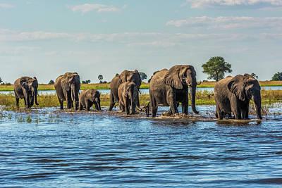 Vintage Uk Posters - Line Of Elephants  Loxodonta Africana by Nick Dale