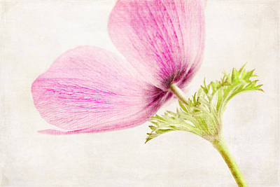 Photograph - Linen In Pink by Caitlyn  Grasso