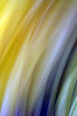Lines And Colors - Amusement Original by Munir Alawi