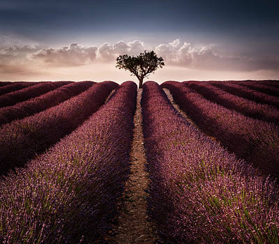 Provence Photograph - Lines by Arzur Michael