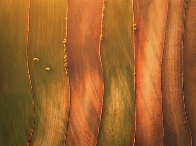 Growth Photograph - Lines II by Javier Del Cerro