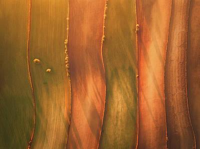 Crops Photograph - Lines II by Javier Del Cerro
