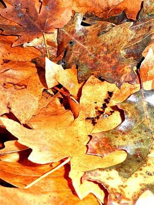 Lines Of Fall Art Print