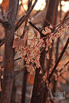 Photograph - Lingering Seeds by Marcia Lee Jones